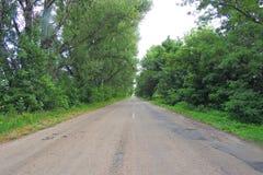 Chamomile στον τομέα στοκ φωτογραφία με δικαίωμα ελεύθερης χρήσης