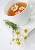 chamomile τσάι Στοκ Φωτογραφίες