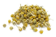 Chamomile 10 Royalty Free Stock Photo