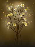 Chamomile. Illustration of medicinal herb chamomile Royalty Free Stock Photography