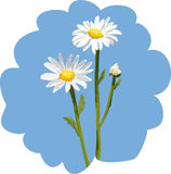 chamomile royaltyfri illustrationer