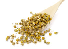 Chamomile 9 Royalty Free Stock Photo