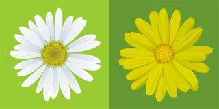 Chamomile&marigold Imagem de Stock Royalty Free