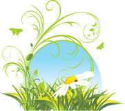 Chamomile And Grass. Decorative Composition Stock Image