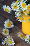 Chamomile (Asteraceae) flower Royalty Free Stock Photos