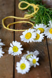 Chamomile (Asteraceae) flowers Stock Photo