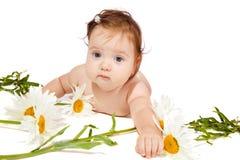 Chamomile baby Stock Image