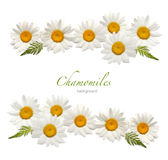 Chamomile background Royalty Free Stock Photos