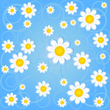 Chamomile background. Seamless illustration of a blue background with chamomile Stock Image