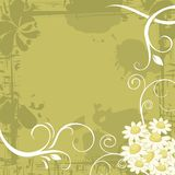 Chamomile Background Stock Photography