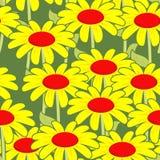 Chamomile bezszwowy wzór Kolorów żółtych kwiatów ornament Fotografia Royalty Free