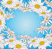 Chamomile on a blue background Royalty Free Stock Images