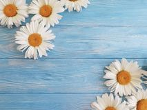 Chamomile freshness decoration vintage design on blue wooden background pattern greeting royalty free stock photography