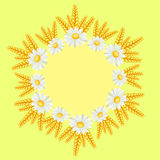 Chamomile border Royalty Free Stock Images