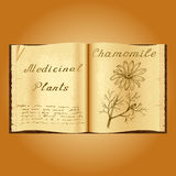 Chamomile. Botanical illustration. Medical plants. Book herbalist. Old open book Royalty Free Stock Photography