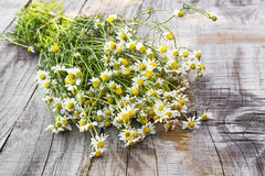 Chamomile bouquet Royalty Free Stock Image