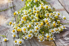 Chamomile bouquet Royalty Free Stock Photography