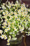 Chamomile bouquet in  glass vase. On the wood table. Selective focus. with bokeh Royalty Free Stock Images