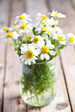 Chamomile bouquet Stock Photography