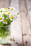 Chamomile bouquet in jar Stock Photo