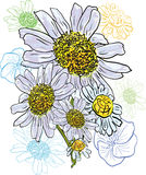 Chamomile bouquet watercolor Royalty Free Stock Image
