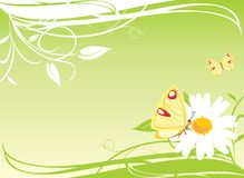Chamomile and butterflies on the floral background Stock Photos