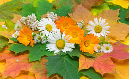 Chamomile, calendula and yarrow on the background of autumn leav Stock Photos