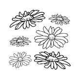 Chamomile, camomile flower floral hand drawn engraving vector illustration.  Royalty Free Stock Photo
