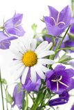 Chamomile and campanulas Royalty Free Stock Images