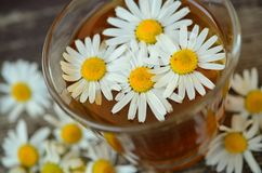 Chamomile, Chamomile Blossoms Royalty Free Stock Photography