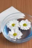chamomile chryzantemy Obraz Stock