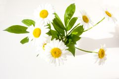 Chamomile in a clear glass vase Stock Photos