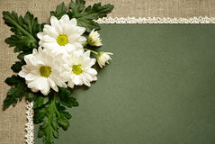 Chamomile on green paper Royalty Free Stock Photos