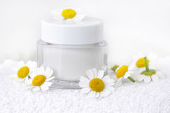 Chamomile cream and flowers Royalty Free Stock Photo