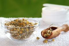 Chamomile cream Royalty Free Stock Photography