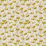 Chamomile or Daisy bouquets, white flowers. Realistic botanical sketch on white background for design, hand draw