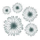 Chamomile daisy close up top view. Isolated botanical floral design element vector illustration
