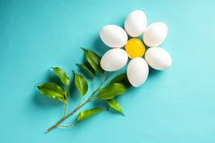 Chamomile Daisy from egg and yolk leave Easter spring concept. Of beginning new flowering above view minimal on blue background royalty free stock photo