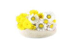 Chamomile and Dandelion Royalty Free Stock Photo