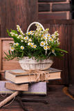 Chamomile decor composition with books and box on. The old brown wood table. Selective focus with bokeh Royalty Free Stock Photos