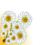 Chamomile design Stock Images