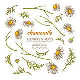 Chamomile elements vector set. On white background Royalty Free Stock Photos