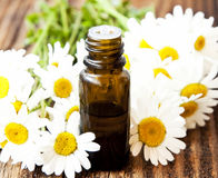 Chamomile Essence with Flowers Stock Images
