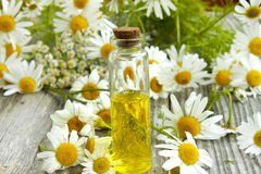 Chamomile essence and flowers Stock Image