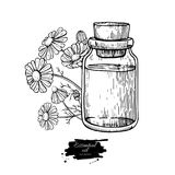 Chamomile essential oil bottle and bunch of flowers hand drawn vector illustration. Isolated drawing for Aromatherapy Stock Images