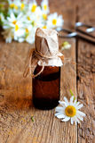 Chamomile essential oil Royalty Free Stock Images