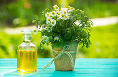 Chamomile essential oil in a glass bottle. A daisy flower in a peat pot.Natural cosmetics. Stock Photo