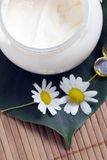 Chamomile and face cream Stock Photos