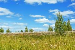 Chamomile field Royalty Free Stock Photos