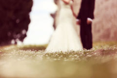 Chamomile field with bride and groom as silhouettes Royalty Free Stock Photos